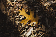 A fall oak leaf on the ground.