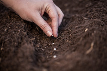 Planting seeds in the garden