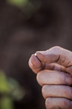 a hand holding a mustard seed