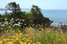 Wildflowers with rocks and trees on a hillside overlooking the ocean on a clear blue day.