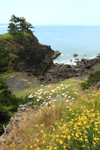Wildflowers with rocks and trees on hillside overlooking ocean,