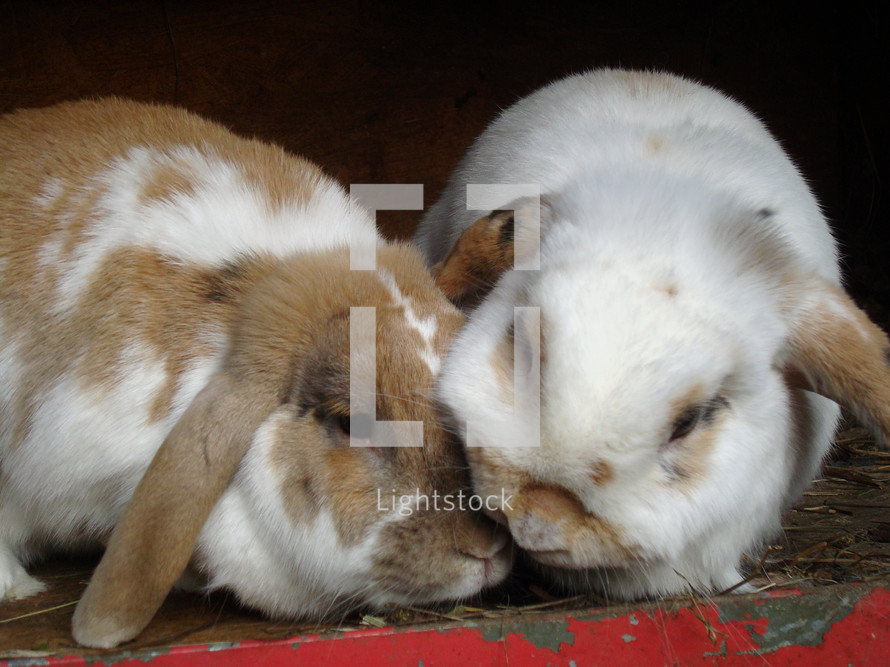 two bunnies next to each other snuggling