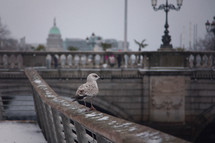 seagull on a railing in snow