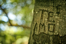 Te Amo - I love you carved on a tree trunk