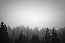Hazy tree tops in a forest