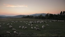 Herd of sheep grazing on a meadow near mountains at dusk.