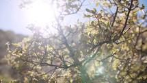 bright sunlight over a bush