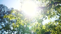 Sunlight on summer tree branches