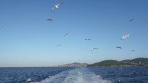 seagull flying behind a boat