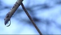 rain drops on twigs