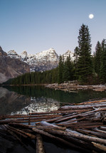 logs surrounding a lake shore