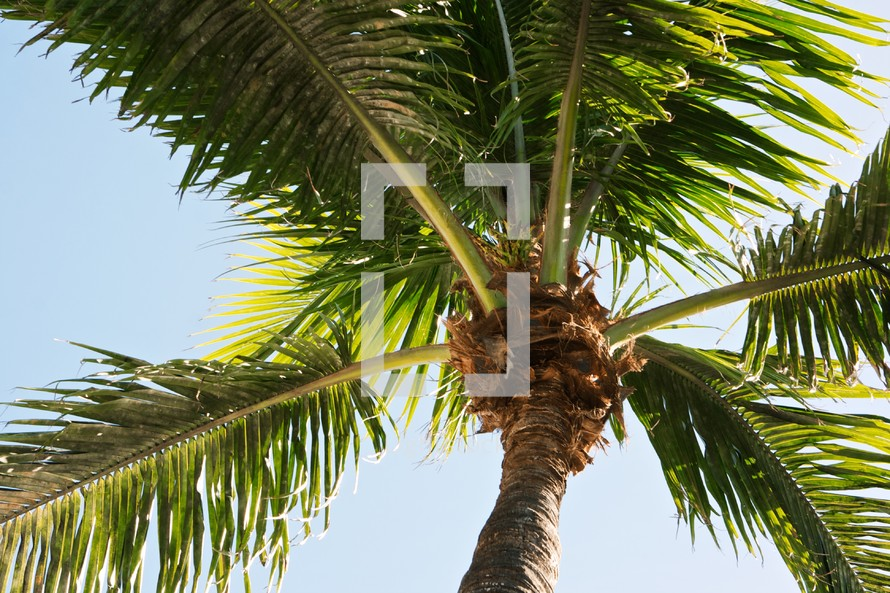top of a palm tree