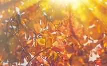 Autumn Leaves & Thanksgiving Season Background