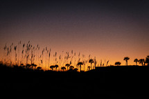 silhouettes of beach dunes and plants at sunset