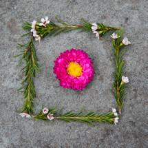 flower framed with leaves