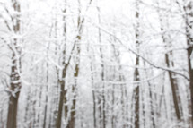 out of focus winter trees