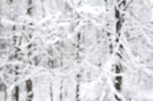 winter trees out of focus