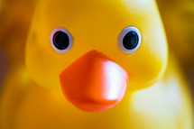 rubber ducky face