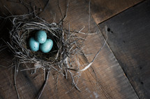 eggs in a bird's nest