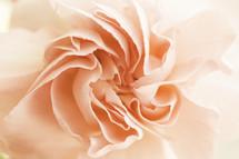 peach flower petals closeup