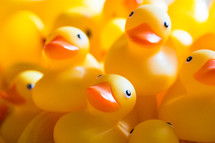 pile of rubber duckies
