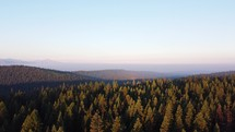 Drone Shot rising over the trees at sunrise.