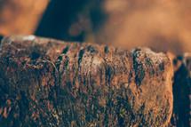 Icy Tree Stump