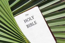 The Holy Bible in palm fronds