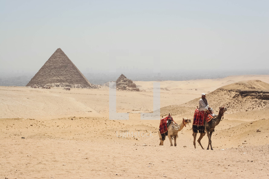 pyramids in Egypt and camels