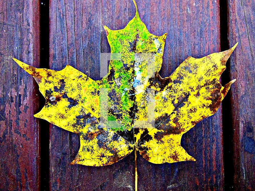 fall leaf on a deck