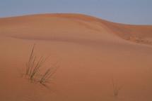 A desert sand dune