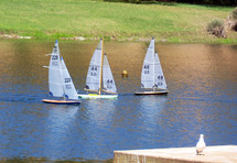 A group of model sailboats sail along a calm lake on a windy day while a bird looks on in the foreground. A relaxing scene for a vacation or quiet day by the pond feeding birds and watching the local scenery.