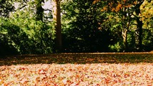 Autumn season in Royal Victoria Park, Bath.  The leaves at a constant fall and settling on the ground peacefully.