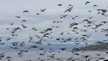pigeons along a shore