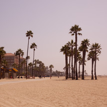 palm trees on a Santa Monica beach