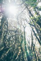 jungle vines in sunlight