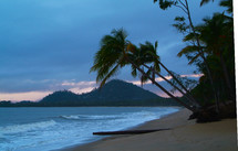 Coconut palm trees on a beach at sunrise