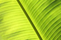 Palm brach or frond