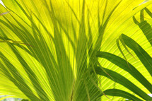 palm fronds branches or leaves
