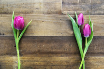 Single stems of purple tulips on a wooden surface.