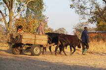 ox pulling a wagon