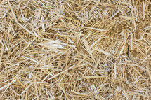 Yellow hay grass