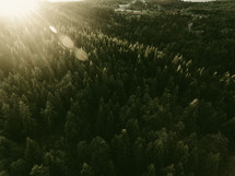 rays of sunlight over an evergreen forest