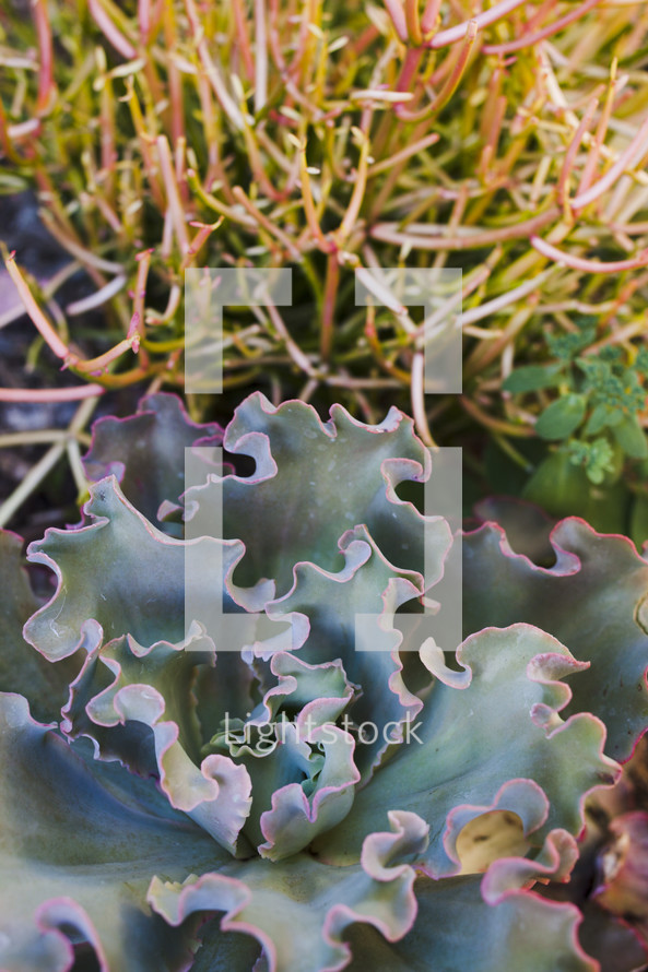 green leafy succulent plant