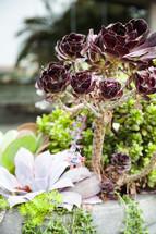 purple succulent plant