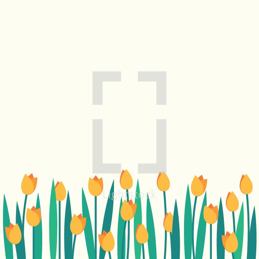 colorful tulip border