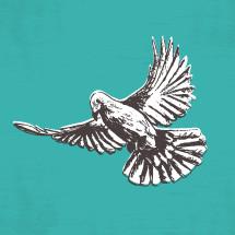 sketched dove illustration.