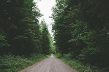 a gravel and dirt road through a forest