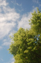 tree branches and clouds in the blue sky