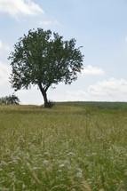 a single tree in a field of wildflowers